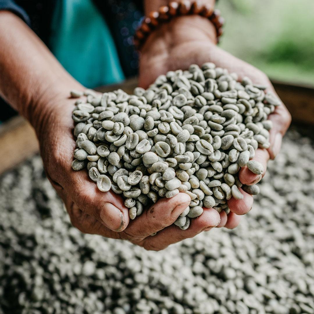 Bali Beans – Green Coffee Beans
