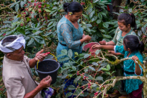 Bali Beans Community