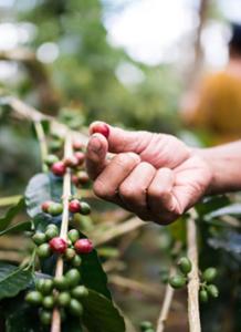 Bali Beans - Core Values