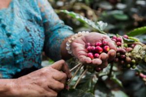 Bali Beans Passion