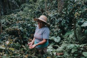 Bali Beans Coffee Farming